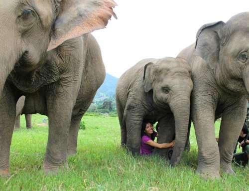 -Lek Chailert: Elephant Whisperer who Rebuilds Trust Between Humans and Animals